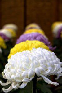 敬老の日に贈ってはいけない花
