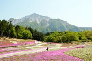 秩父羊山公園の芝桜 行き方 アクセス