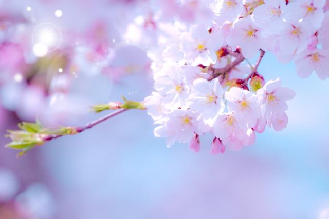 上野公園お花見2019桜の見所や行き方、駐車場や混雑状況について