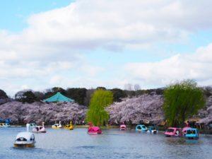 上野公園お花見見どころ