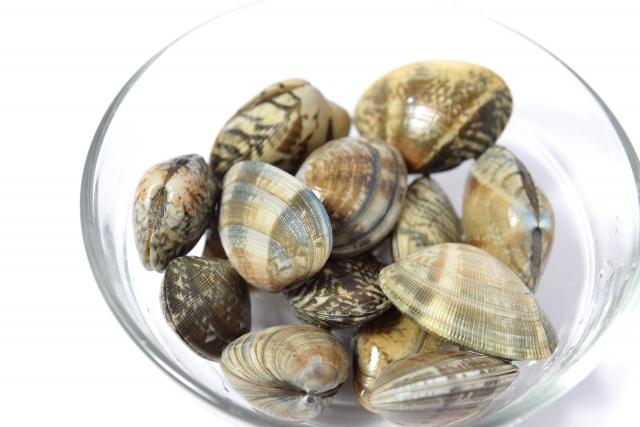 潮干狩りアサリの保存や砂抜きと塩抜きのコツと賞味期限や持ち帰り方