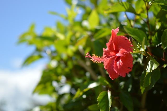 沖縄5月GWの紫外線対策!日焼け止めは?服装は?紫外線は強いの?