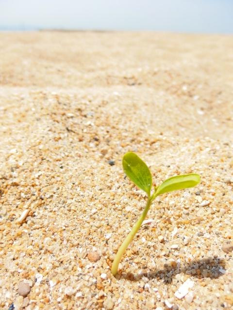 サハラ砂漠でゴミをまくとなんで緑地化するのか? 取り組みや行っている人は誰?