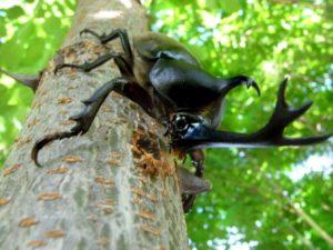 タグを削除: カブトムシ 餌 食べ ない カブトムシ 餌 食べ ない