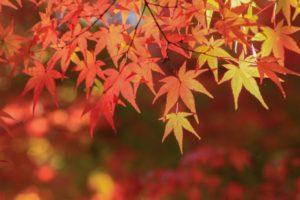 紅葉 映える 色