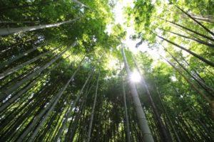 流しそうめん 竹 保存