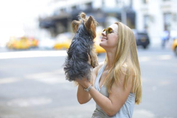 新幹線に愛犬と一緒に乗ることはできるの?料金とマナーについて