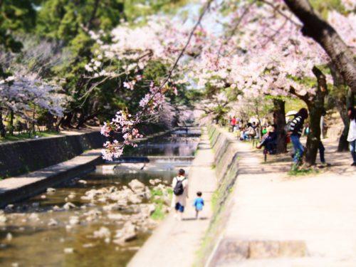 夙川桜祭り